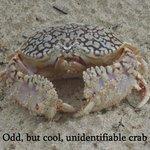 Unusual crab at Barker Nat'l. Park