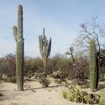 Cacti and other desert plants along park trails