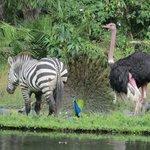 Bunte Tierwelt