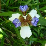 es wimmelt nur so von Orchideen