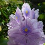 ein kleiner Vorgeschmack zu den vielen Blumen im Park
