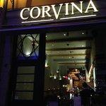 Corvina Photo