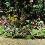 migliaia di orchidee....