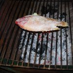 Red snapper on the grill