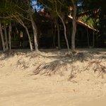 Сосны на пляже