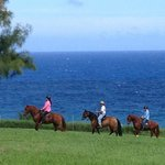 Horseback riding Paso Fino horse and whale watching
