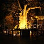Hall de entrada com Baobá