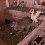 Lion, pelican, koalas