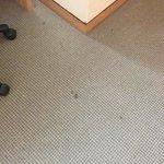 Manchas en la alfombra