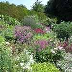 Herbaceous border July 2013
