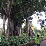 Im Jardin de aclimatacion de La Orotava