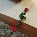 Received a red rose from the Hotel on February 14 <3