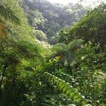 La foresta della Dominica è orgiastica di verde, di essenze d'ogni tipo!