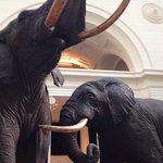 Elephants of the Field Museum