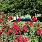 Rosas rojas, se vislumbra la piscina.