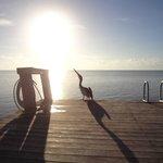 Meu amigo pelicano!