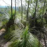 I love grass trees.