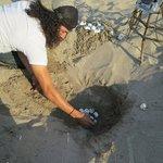 Saving turtle eggs