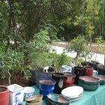 Bonsai vender at the Hatsume fair