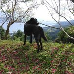 竹湖山居民宿的腹地-掃別山。民訴接待狗小黑會在前面引路。