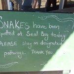 pericolo di serpenti!