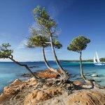 Voilier sur l'eau bleue de Palombaggia
