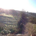 Tarr Farm Inn Feb 2014 - Frosty view from Room 1