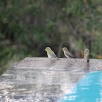 Local birds having fun in the pool's edge