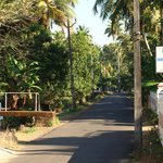 A nature's bliss.....Village lane outside the homestay