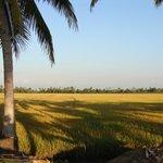 A nature's bliss.....Beautiful Kumarakom village