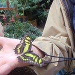 Butterfly at La Paz