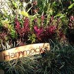 Hammocks sign