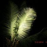 The wonderful palms above you at night