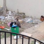 rubbish tip outside room complete with vultures
