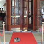 The regal welcome by Scabanga Cat at the entrance