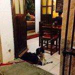 Visitante VIP espera paciente en la puerta a sus dueños.