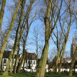 the trees on the green