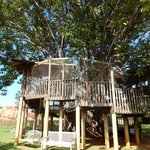 A Real Treehouse in the Children's Garden