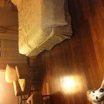 Camera superior con il nostro cane