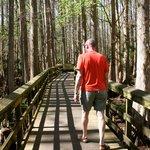 boardwalk through Cypress Swamp Trail