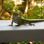 Resident lizard!