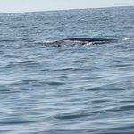 Whales off shore