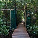 Walkway over mangroves