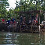 View of Elephants bathing from kayak