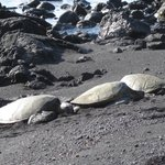 Black Sand Beach - Sea Turtles
