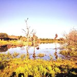 Edge of the propery has savannah and lake