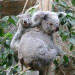 Mum and baby Joey