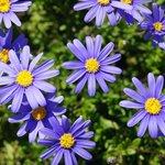 Flores jardín