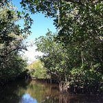 Mangrove Wilderness