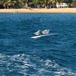 Surfing Seagulla